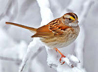 'Winter Friends...Sparrow'